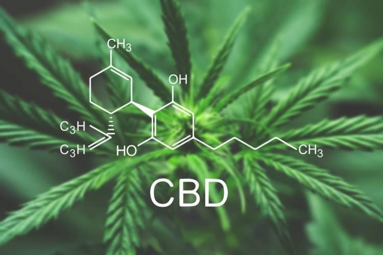 CBD a leki tradycyjne